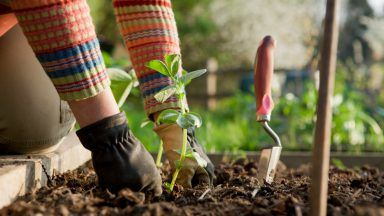 Stock picture of gardening.