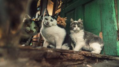 Stock image of cats.